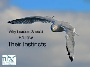 Why Leaders Should Follow Their Instincts by Suzi McAlpine, The Leader's Digest blog