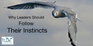 Why Leaders Should Follow Their Instincts_The Leader's Digest blog